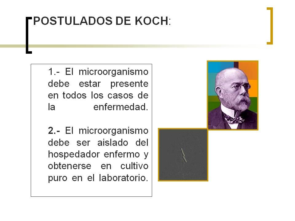 Postulados de koch for Koch 1 lehrjahr lohn